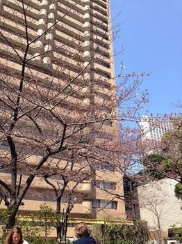 2016桜2.jpg