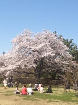 桜7.JPG
