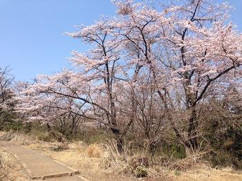 高尾山2.jpg